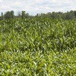 Llega la nueva legislación en el sector biocidas