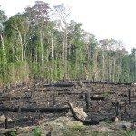 Bosques sostenibles: reto compartido, responsabilidad de todos