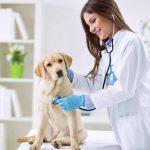 ¿Cómo debe ser la higiene en las clínicas veterinarias?