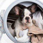 ¿Cómo limpiar en presencia de mascotas?